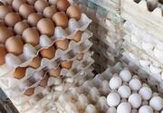 کشتار گسترده مرغها منجر به افزایش قیمت تخم مرغ شد/به وزیر جهاد هشدار دادیمامااهمیت نداد!