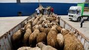 علت افزایش قیمت گوشت در هفته های اخیر چیست؟