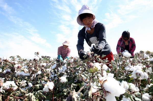 آمریکا قصد دارد واردات کتان از چین را تحریم کند