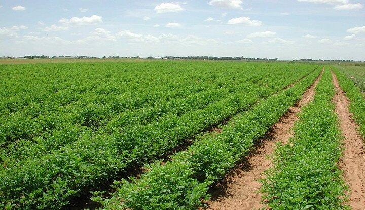 طرح «ارتقاء حاصلخیزی خاک کشاورزی» تهیه می شود