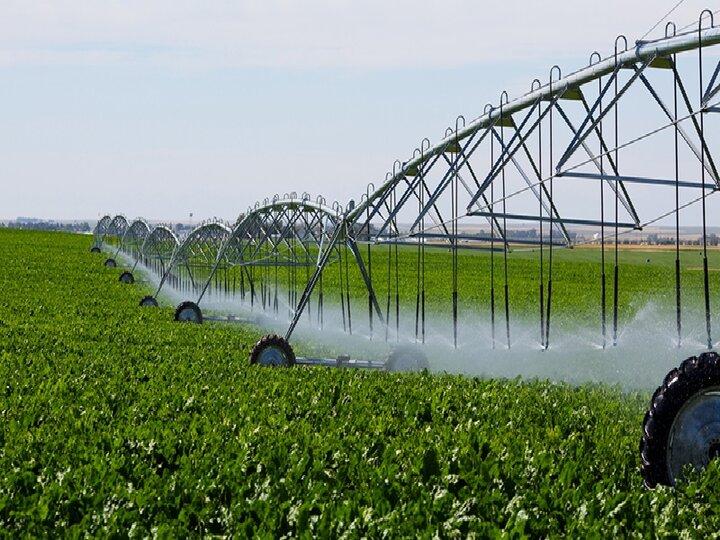 کشاورزی قراردادی جایگزین خرید تضمینی میشود