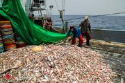 ممنوعیت صید ترال در راستای آیش و پایش ذخایر فانوس ماهیان