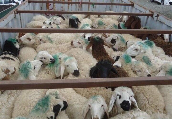 صادرات گوشت بهانه جدید افزایش قیمت