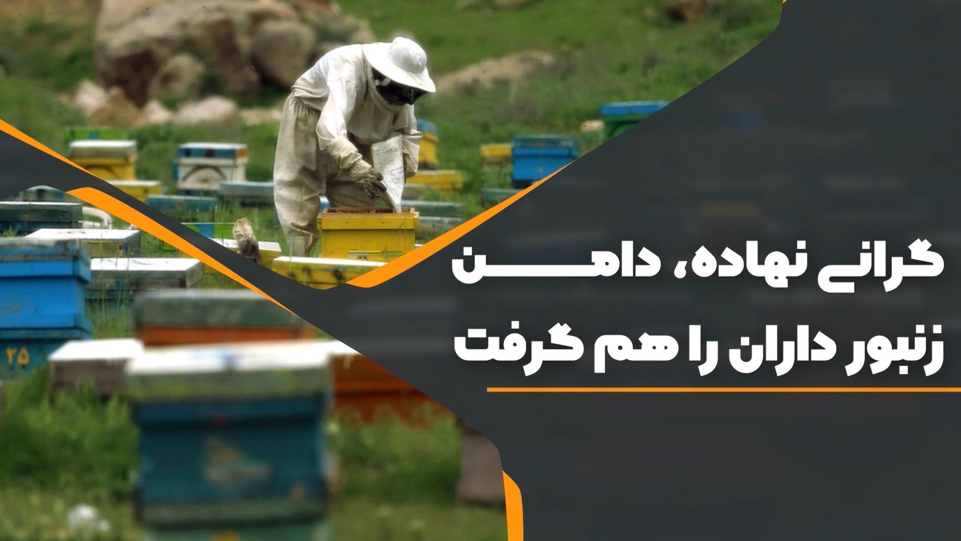 گرانی نهاده، دامن زنبورداران را هم گرفت + ویدیو