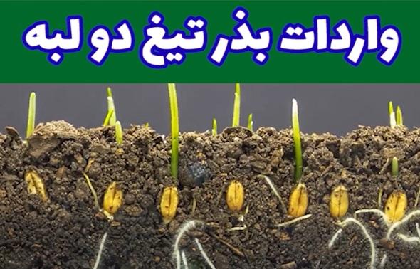 واردات بذر، تیغ دو لبه + ویدیو