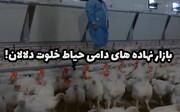 بازار نهاده های دامی حیاط خلوت دلالان! + ویدیو