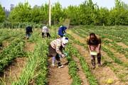 هشدارهای هواشناسی به کشاورزان/ کاهش ۵۳ درصدی بارش نسبت به سال قبل
