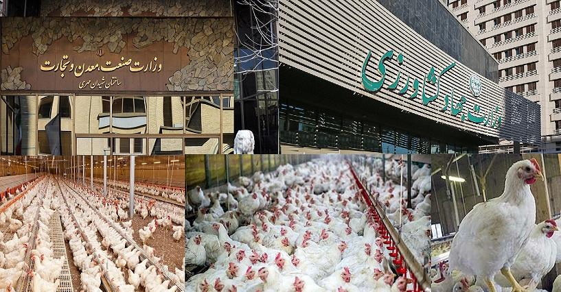 علت پرواز قیمت مرغ چیست؟ + ویدیو