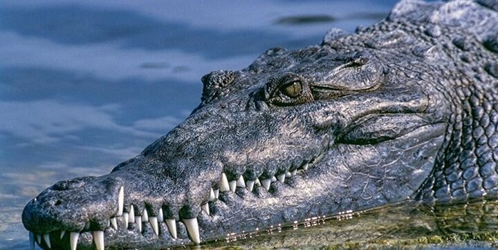 ببینید   لحظه عجیب شکار پهپاد توسط تمساح گرسنه