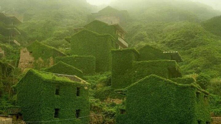 تصاویری حیرت انگیز از سازه های فلزی و سنگی پوشیده شده با گیاهان