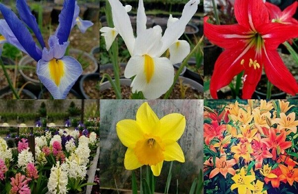 ۴۰۰ گونه نادر از گلهای وحشی دنیا در ایران + عکس و ویدیو